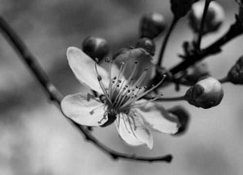 Blühende Träume – Gartentage