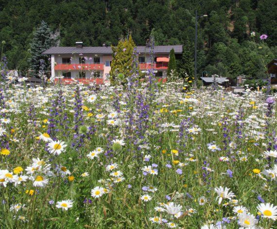 Eine Blumenwiese für jeden Garten