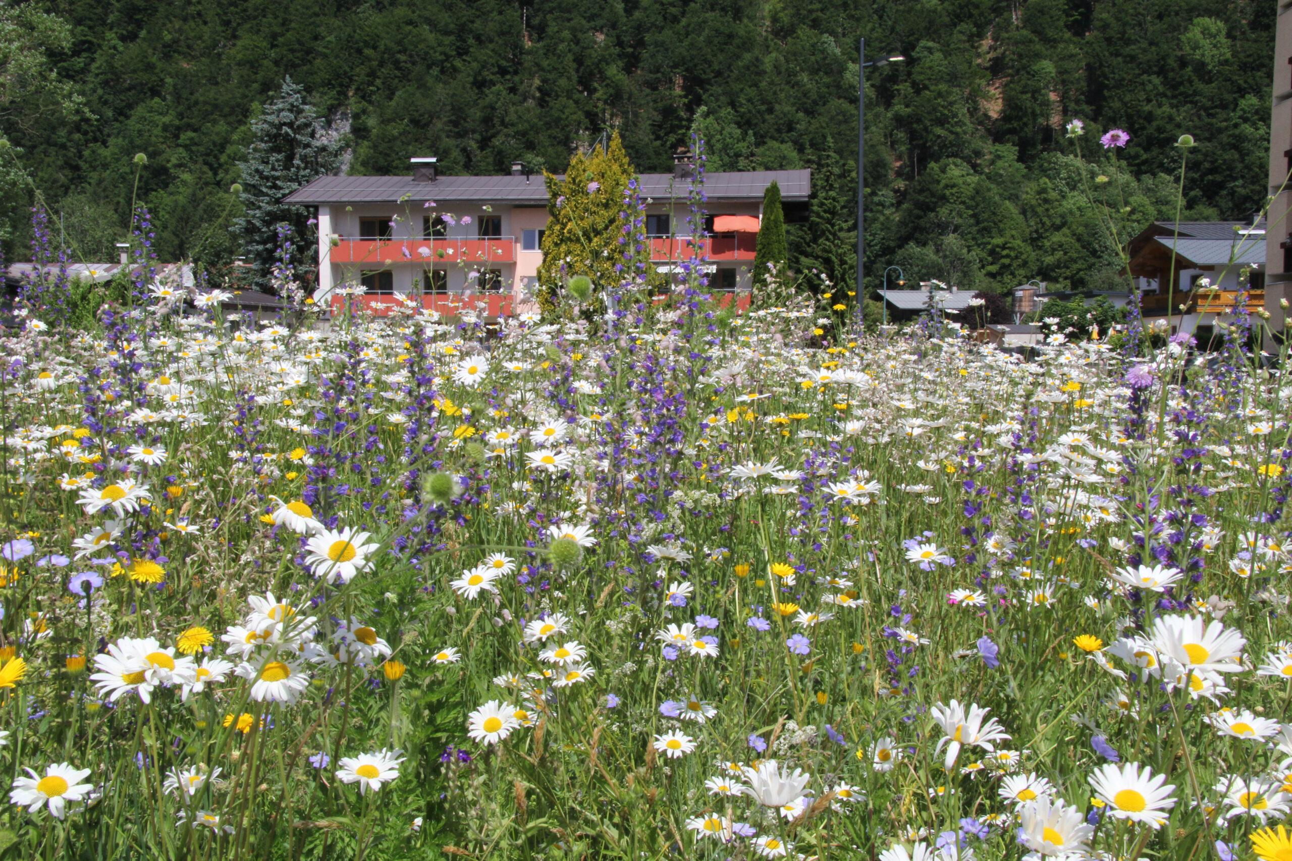 Pflanzenschutz im Naturgarten, 09.06.2021