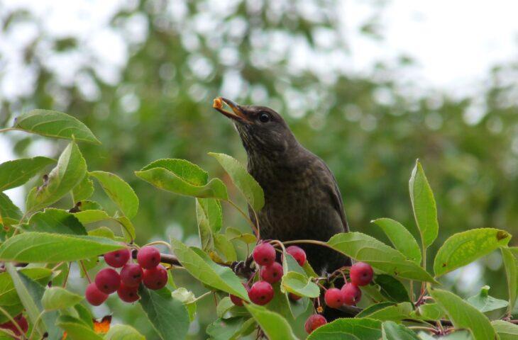 So leben unsere Gartenvögel, 11.11.2021